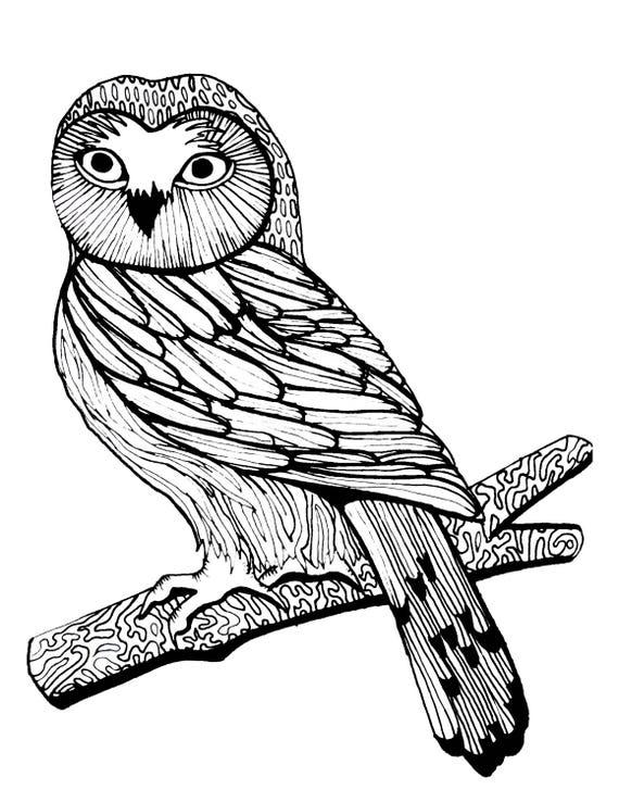 Items similar to adult coloring page woodland owl birds for Birds of prey coloring pages