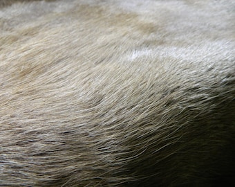 Real Natural Reindeer Fur Hide Professionally Tanned and Ready For Crafts or Decor RD03 White Brown Tanned Reindeer Half Hide From Finland