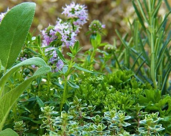 Herbs of the Month Subscription