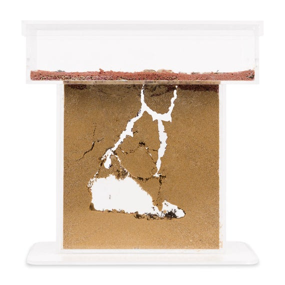 Ant Farm Medium with Free Ants and Queen Educational formicarium for LIVE Ants