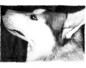 Articulos Similares A Retrato Del Lobo Dibujo A Lapiz Realista