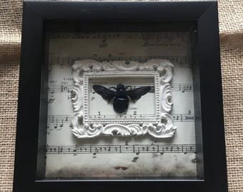 Framed Black Carpenter Bee on Antique Sheet Music