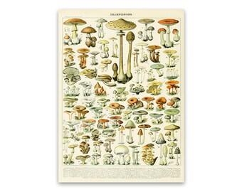 mushrooms poster, mushroom print, fungus species diagram chart, adolphe  millot scientific illustration art, am38
