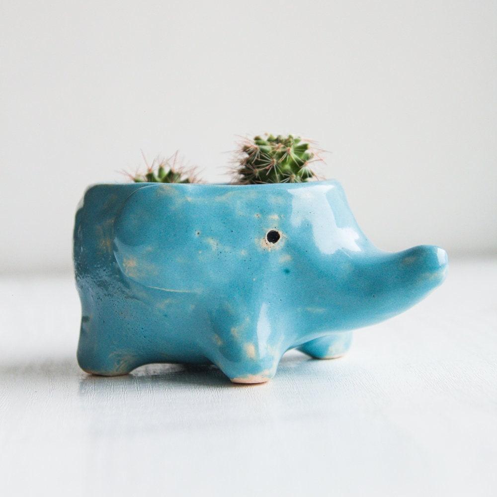 Plantes Succulentes éléphant Pot à Cactus Cadeau Succulent