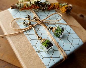 Cube Terrarium Stud Dangle Earrings