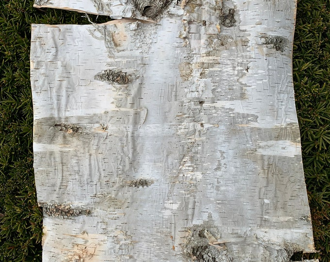 White Birch Bark Sheet, Large Size, 24 inches x 16 inches, Flat and Firm with Layers
