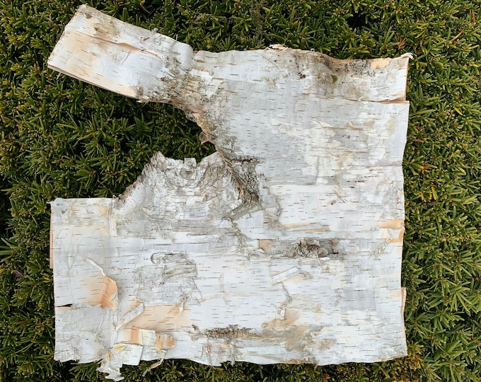 White Birch Bark, 13 inches x 15 inches, Flat and Firm