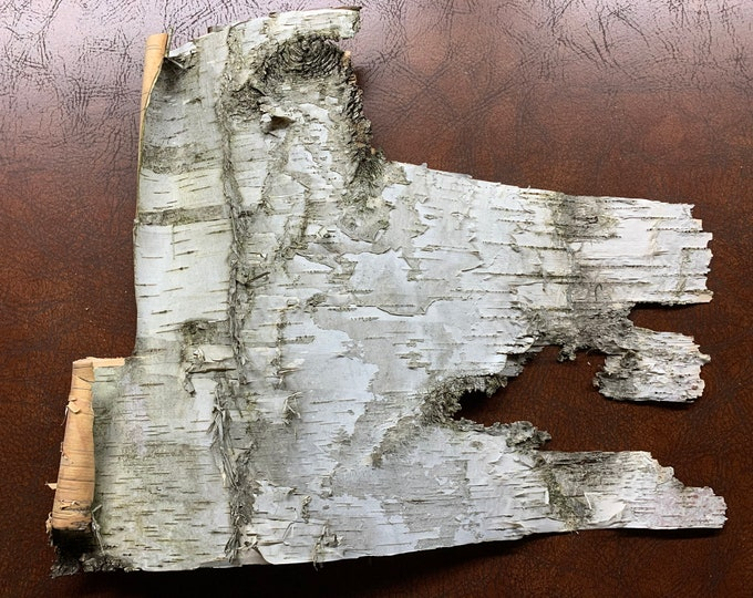 White Birch Bark, 14 inches x 11 inches