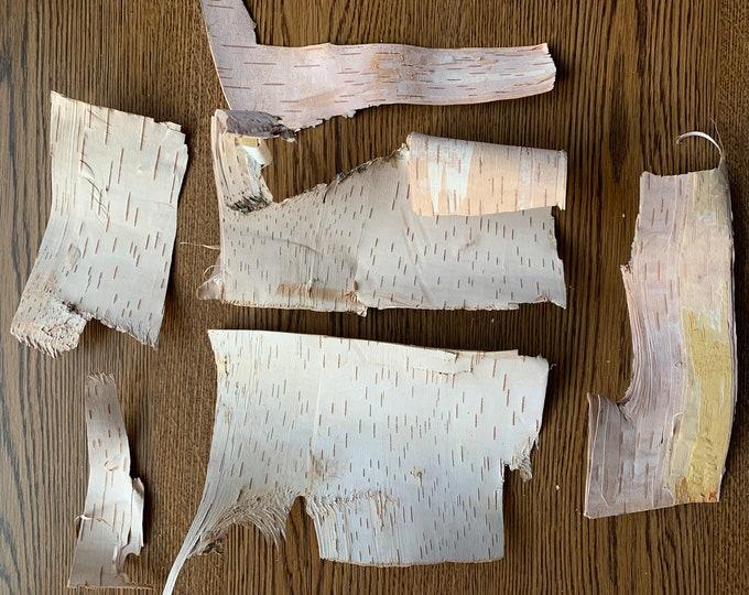 White Birch Bark, Inner Layer, Phloem, 7 pieces
