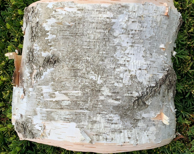 White Birch Bark, 13 x 8 inches