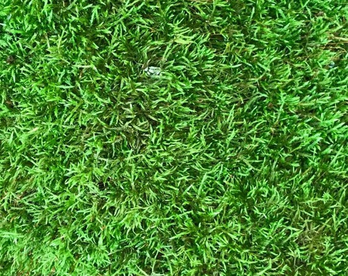 Moss combination, 6 x 6 inch live sheet moss, one 3 inch diameter cushion moss and 4 ounces of peat moss