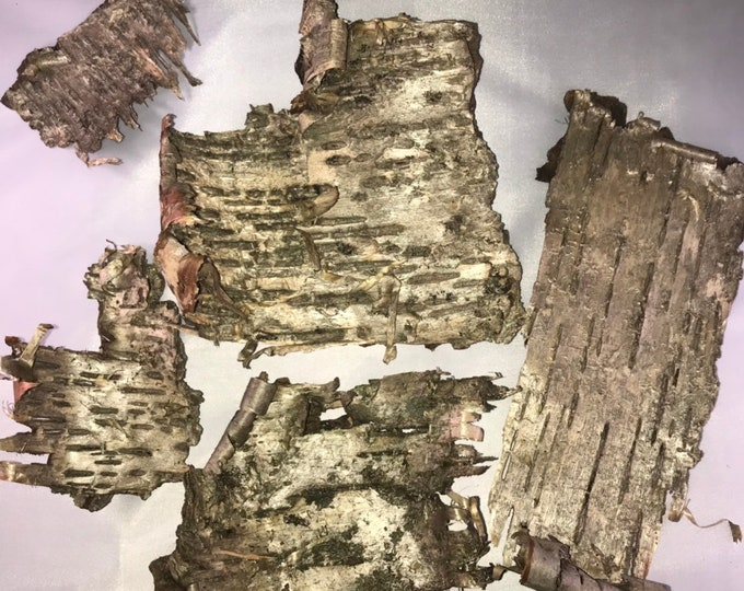 Birch Bark, Yellow Birch bark with a touch of green on five golden pieces