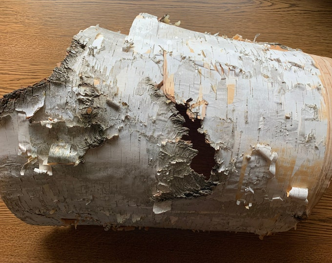 White Birch Bark, Semi-Round, Approximately 18 inches x 17 inches
