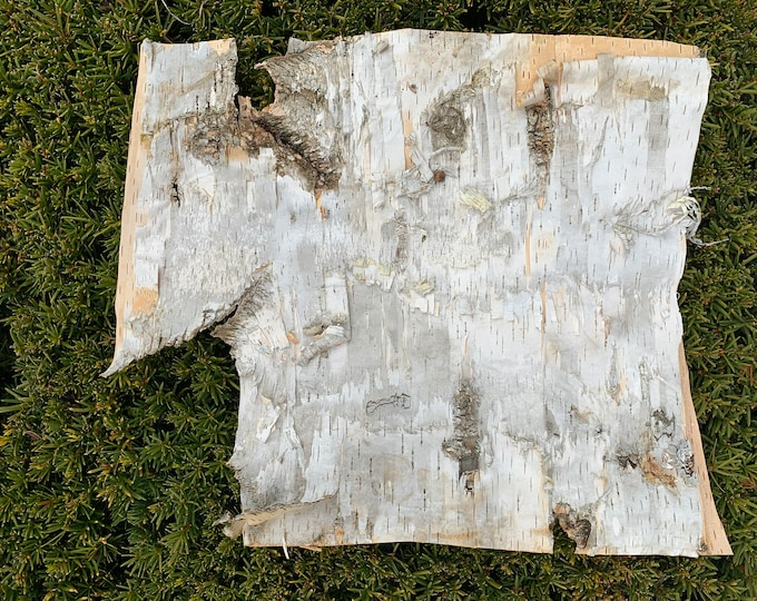 White Birch Bark, approx 17 inches x 15 inches, flat and firm
