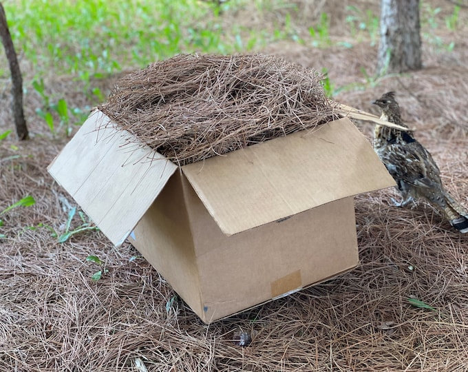 Pine Straw, Red Pine Needles, Dried - 10 Pounds