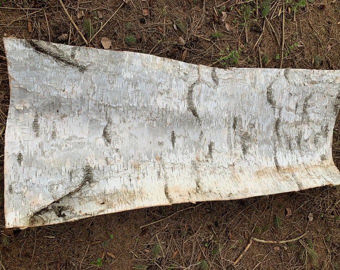 White Birch Bark, firm, rectangular piece approximately 58 inches x 23 inches