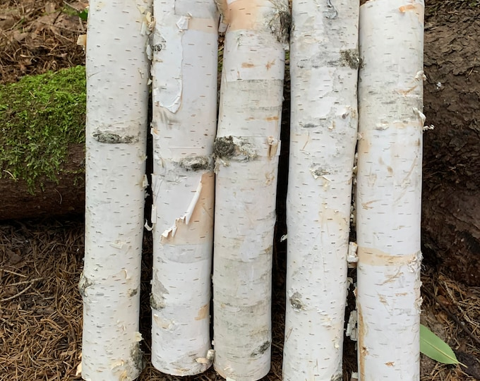 White Birch Branches, 5 count, 12 inches in length, 2 inch diameters