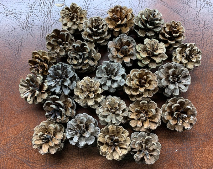 Pine Cones,  Red Pine Cones, Smaller in Size, Apprx 1 1/2 inch wide and one inch high, 100 count