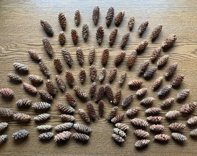 Spruce Cones, 100 count