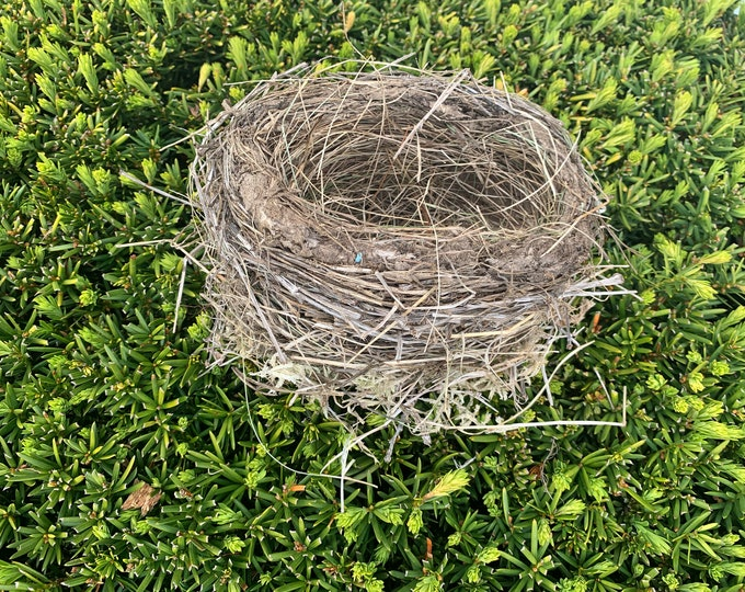 Bird's Nest, Large Size, Approximately 6 inches diameter