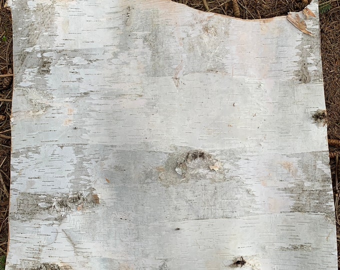 White Birch Bark, approximately 23x21 inches
