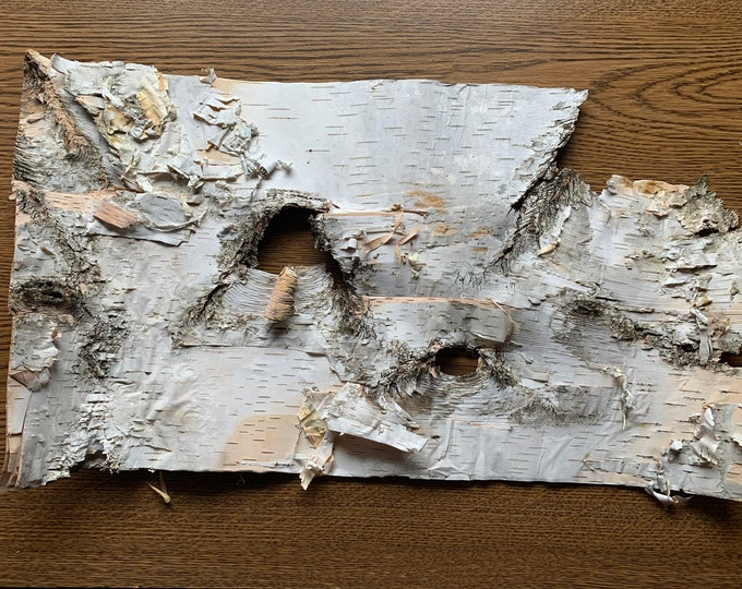 White Birch Bark, approx 16 inches x 10 inches, flat and firm