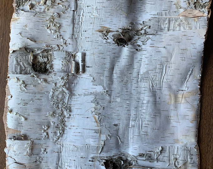 White Birch Bark, approx 17 inches x 14 inches, flat and firm