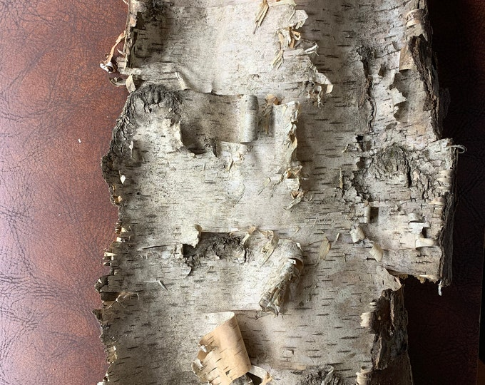 White Birch Bark, Approximately 17 inches x 10 inches
