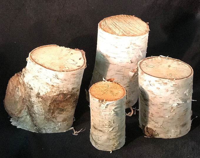 White Birch logs, 4 count, varies from 3 inches to 4 inches long and approximately 2 1/2 inches in diameter