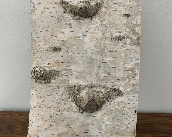 White Birch Bark, firm, rectangular piece approximately 15 inches x 8 inches