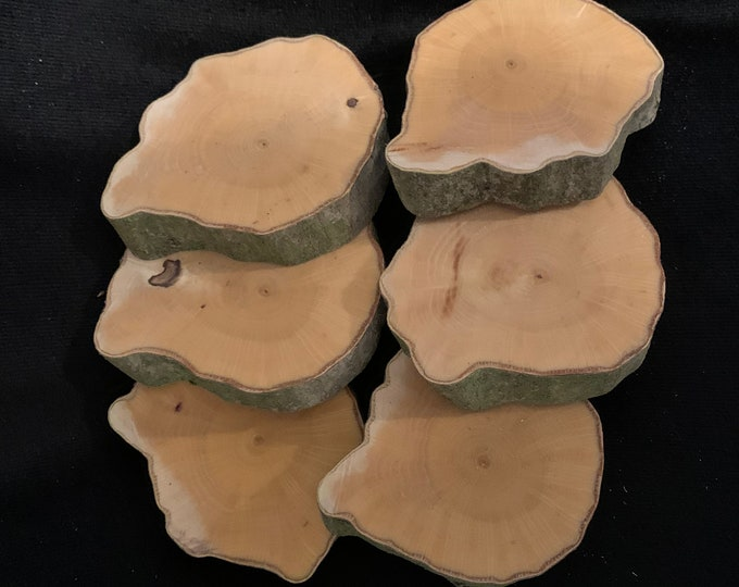 Blue Beech, Musclewood, Ironwood slices, approximately 3 inches in diameter