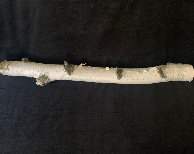 White Birch Branch, 20 inches in length, Approximately 1 1/2 inch diameter