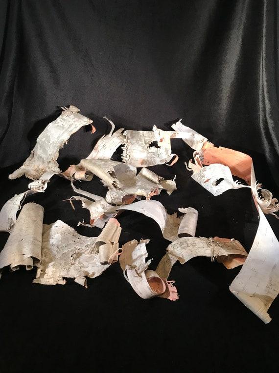 White Birch Bark, 10 pieces