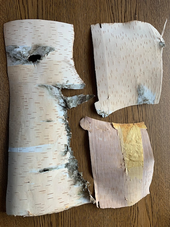 White Birch Bark, Inner Layer, Phloem,3 pieces