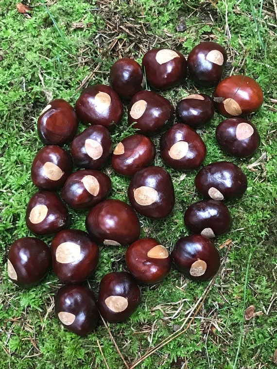 Chestnuts/Buckeyes, 25 count