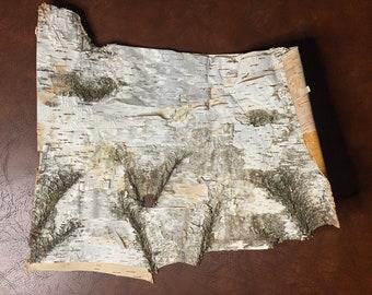 White Birch Bark, Paper Thin Bark, 18 inches x 15 inches