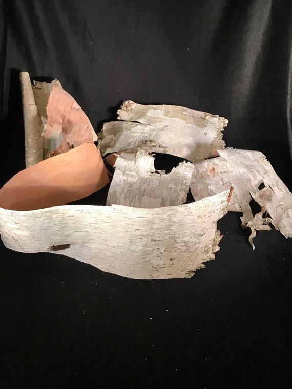 White Birch Bark, Five Large pieces