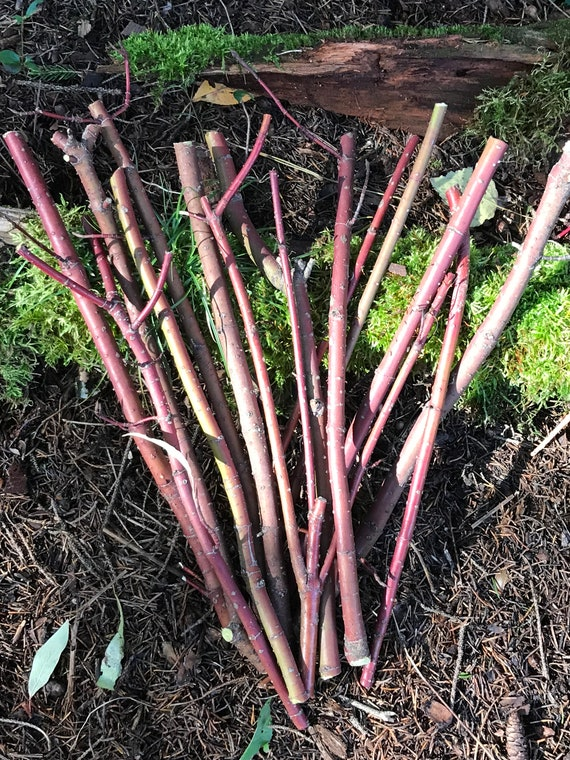 Sticks, Red Branches from Dogwood Red Osier, 6 count, approximately 1/4 inch in diameter x 12 inches long