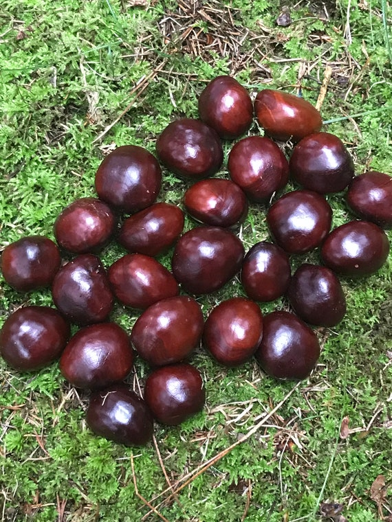 Chestnuts/Buckeyes, 100 count