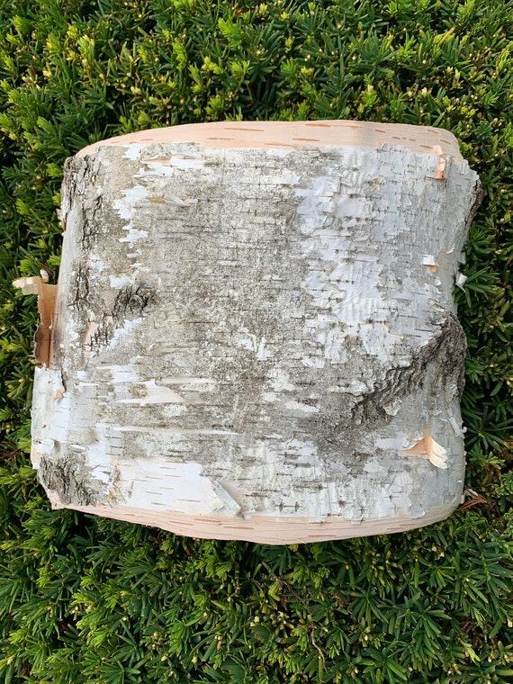 White Birch Bark, 13 x 8 inches