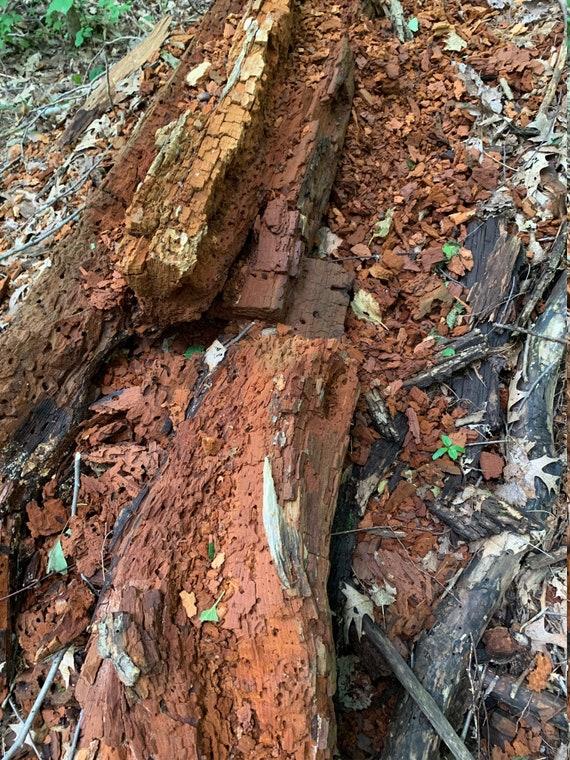 Decomposed Log, 6 Ounces