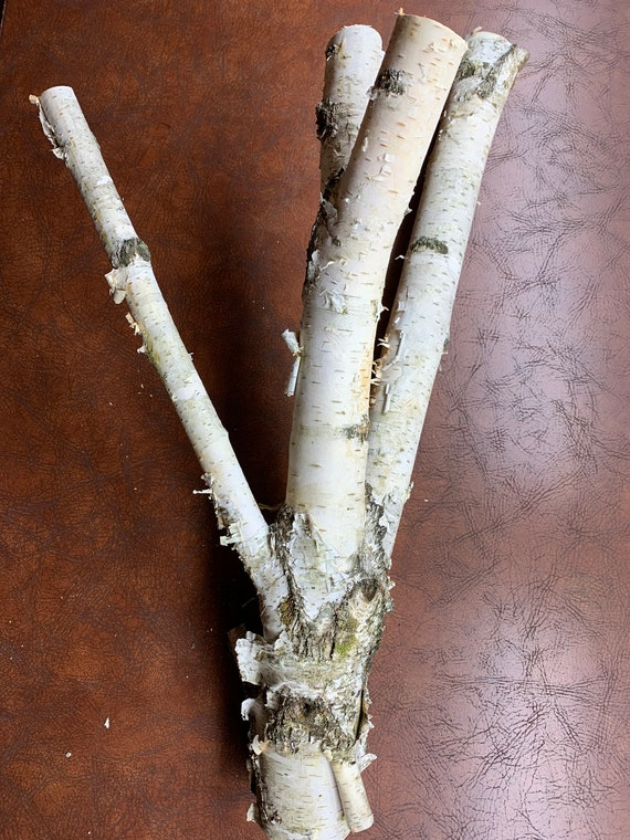 White Birch Tree Branch with Four Prongs