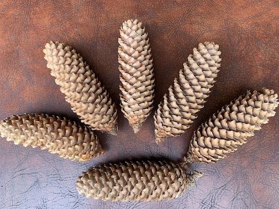 Fir Cones, 6 count
