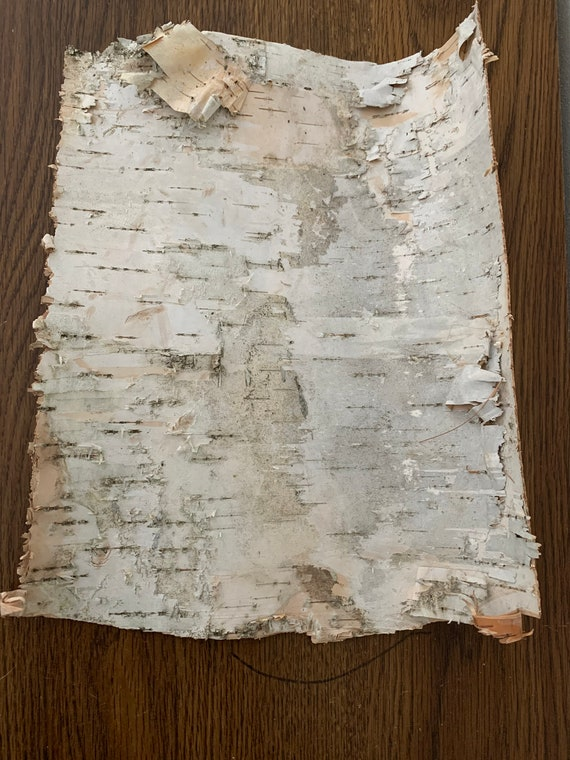 White Birch Bark, approximately 12x9 inches