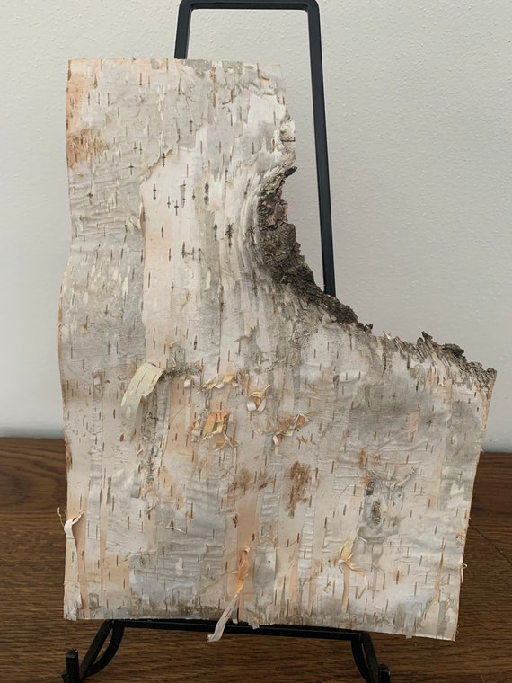 White Birch Bark, firm, rectangular piece with personality, 12 x 9 inches