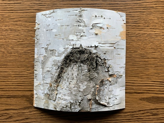 White Birch Bark, approx 6 inches x 6 inches, flat and firm