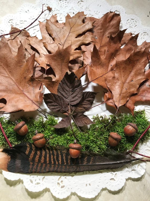 Outdoor Samples of Acorns, Oak Leaves, Live Moss, Wild Turkey Feather and Dogwood Red Osier