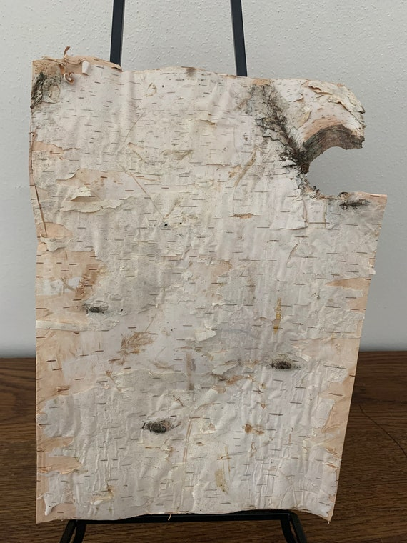 White Birch Bark, 11 inches x 8 inches