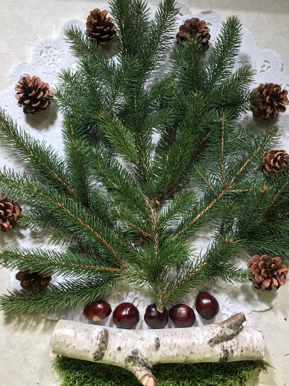 Spruce Branches, Pine Cones, Chestnuts, White Birch Branch and Doily