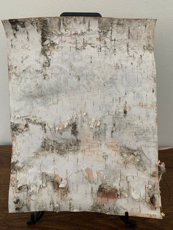 White Birch Bark,  approximately 13 inches x 10 inches